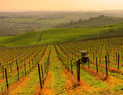 <b> The beautiful landscape of Chianti </b>